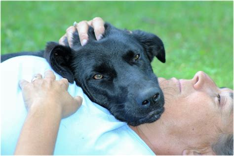 can i take my puppy outside before vaccinations 7 key steps to take before you take your cing