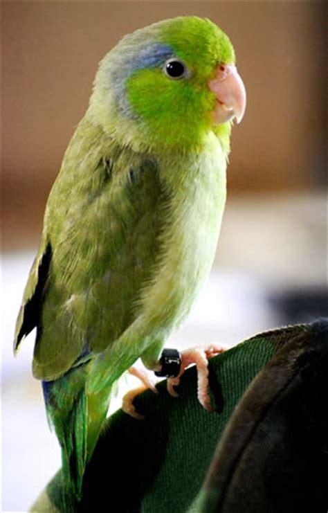 small birds do talk pet birds by lafeber co