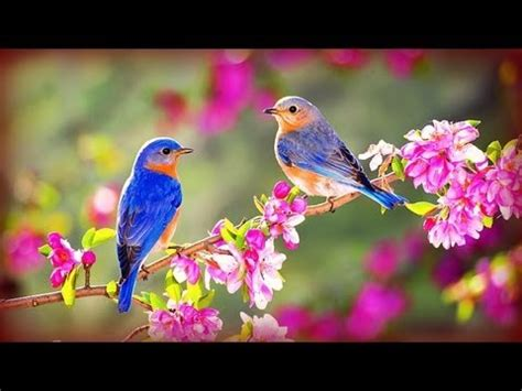 morning birds soft rain 169 youtube