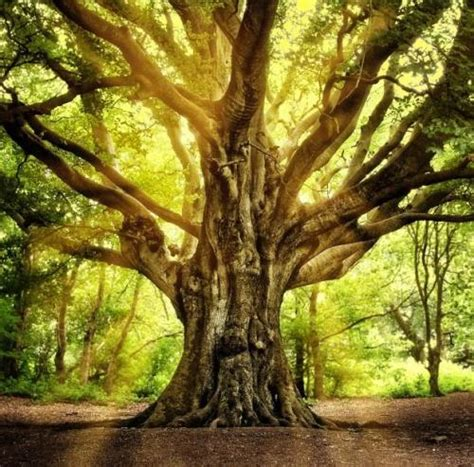 0008218439 the hidden life of trees the hidden life of trees what they feel how they