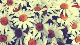 Pretty Flowers In French - tapeta ładne kwiatki stokrotki bukiet vintage 1920x1080