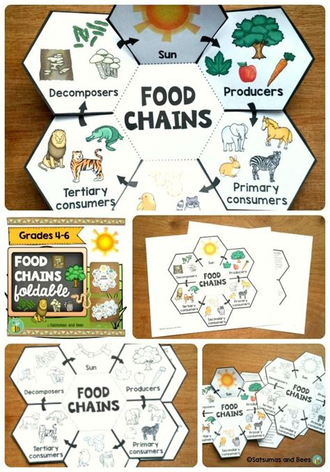 food webs on pinterest food chains science and food food chains interactive science notebook foldable food