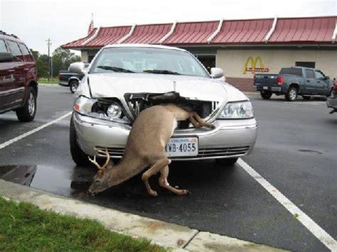 smart car deer story of an auto deer collision outdoor oddities