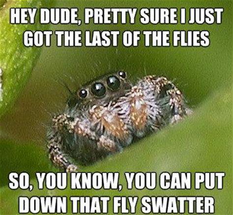Misunderstood Spider Meme - the misunderstood house spider meme alligator sunglasses