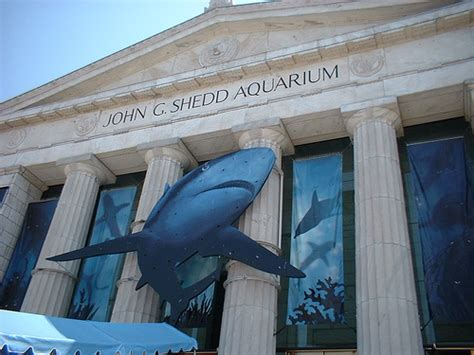 Shed Aquarium by Shedd Aquarium The Best Places To Visit In Chicago Usa