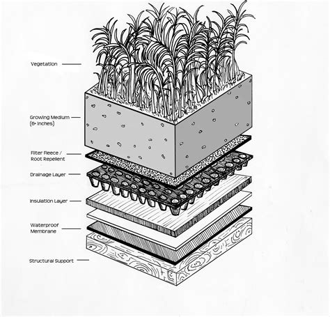 Intensive vs Extensive Green Roofs: What?s the difference