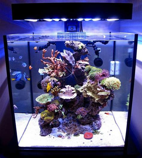Marine Tank Aquascaping 60 gallon tank au naturale inspiration and aquascaping