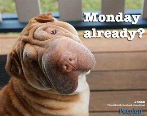 Pet Insurance Meme - 60 best images about pet memes on pinterest cats