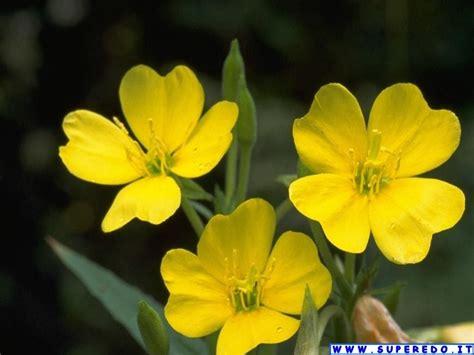immagini fiori sfondi fiori 58 sfondi in alta definizione hd