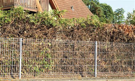 Thuja Wann Schneiden 5632 by Thuja Schneiden Selbst De
