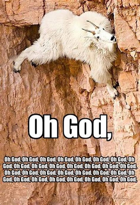 Funny Goat Memes - 30 funny animal captions part 12 30 pics amazing