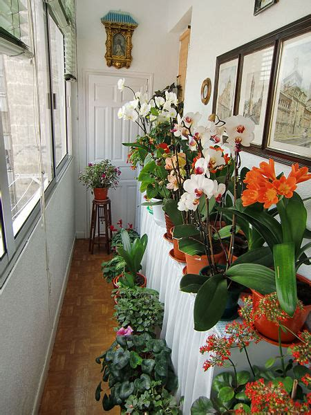 indoor apartment garden near window   553   hostelgarden.net