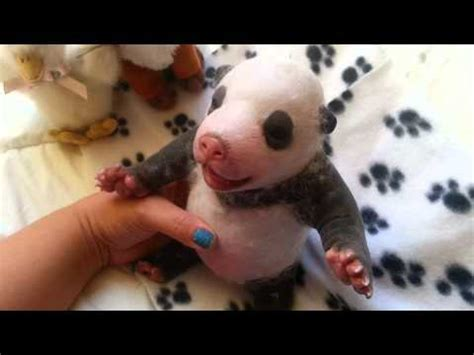 silicone puppies for sale silicone newborn chihuahua puppy by ping lau funnycat tv