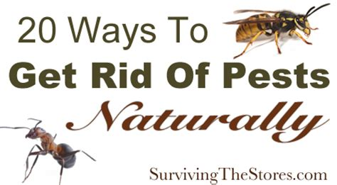 how to get rid of backyard flies how to naturally get rid of pests with no harmful