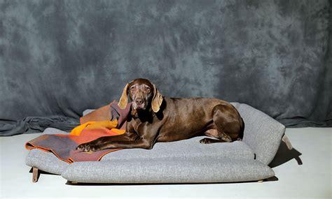 camas grandes para perros camas para perros grandes la comodidad es el factor clave