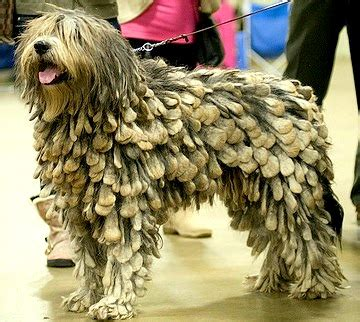 cool looking dogs 13 coolest looking breeds
