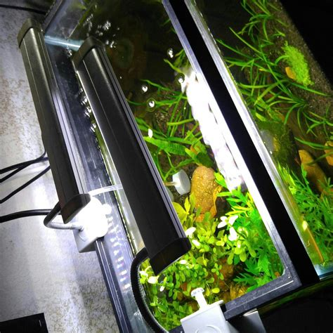Led Lighting For 10 Gallon The Planted Tank Forum
