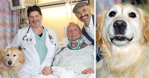 golden retriever saves owner breaks his neck and nearly freezes to but his saves his bored panda
