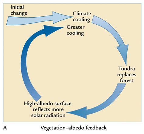 feedback diagram feedbacks