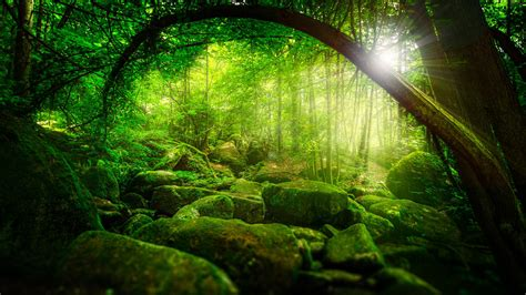 wallpaper green scenery nature forest jungle trees sunshine green moss