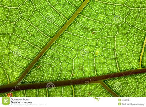 pattern bush leaf green leaf green background veins pattern jungle plant stock