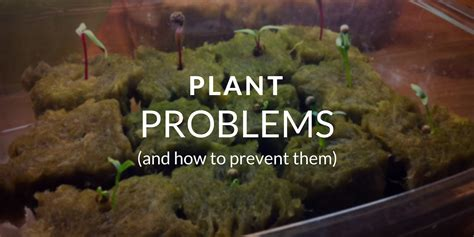 common houseplant problems 12 common tower garden problems and how to avoid them