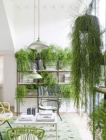 best indoor hanging plants indoor hanging plants www pixshark com images galleries with a bite