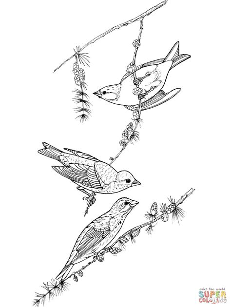 yellow finch coloring page finch coloring download finch coloring