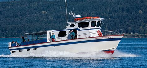 fast boat whale watching seattle western prince whale watching san juan island near seattle