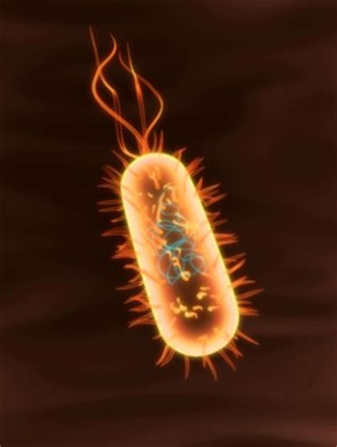 exle of eubacteria eubacteria exles
