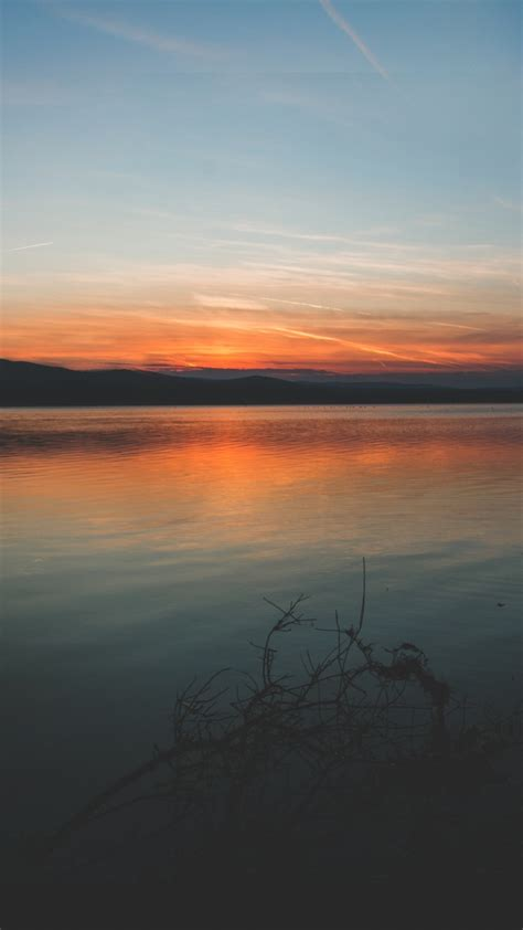 coast branches sunset horizon wallpaper