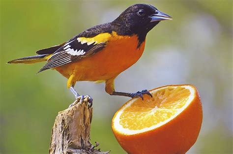 Birding   Birds & Blooms