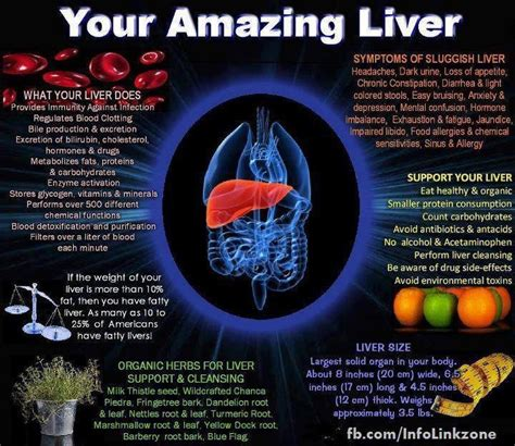 Arbonne Liver Detox by Pin By Jannuth Carroll On Health
