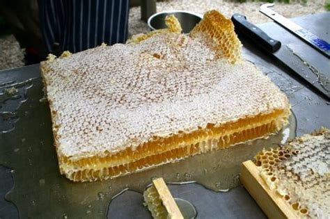 How To Extract Honey From A Top Bar Hive by Pin By Reedy On Beekeeping