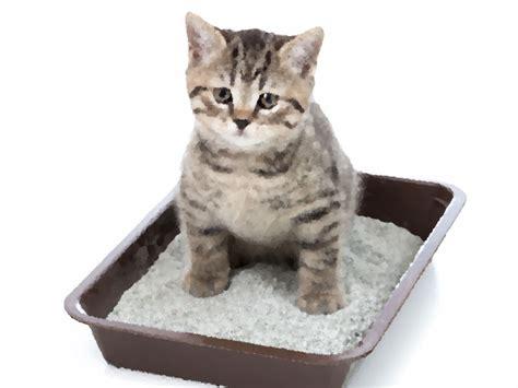 cassetta gatto quando il micio sporca vicino alla cassetta 1 2