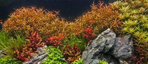 background aquarium air tawar gratis terbaik