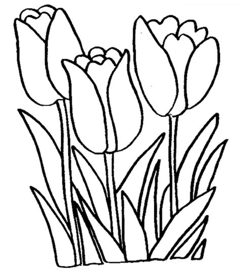 coloring pages large flowers free printable tulip coloring pages for