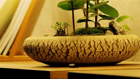 vasi x bonsai dalani vasi per bonsai custodi di tesori preziosi