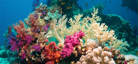 Cool Looking Beds the significance of our coral reefs scuba diver life