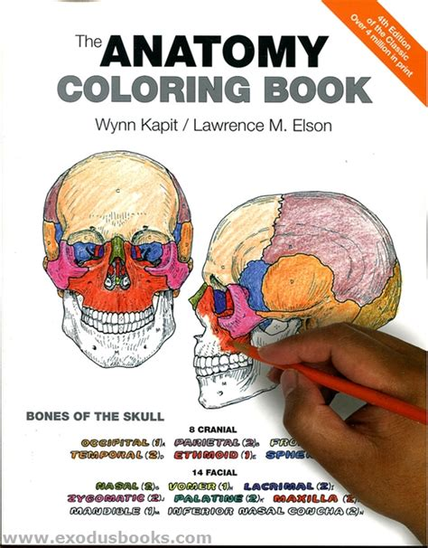 anatomy coloring book mccann anatomy coloring book exodus books