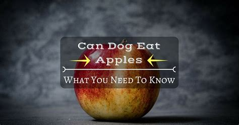 can dogs eat apples can dogs eat apples what you need to thinkofpuppy