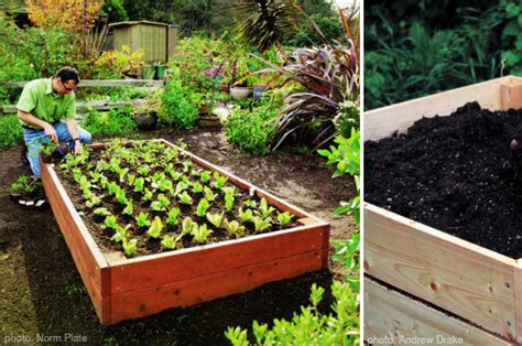 vegetable garden tips at home with vallee
