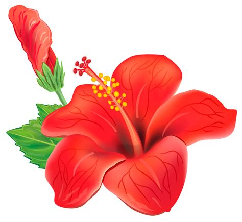clipart free downloads 100 hibiscus clip images free