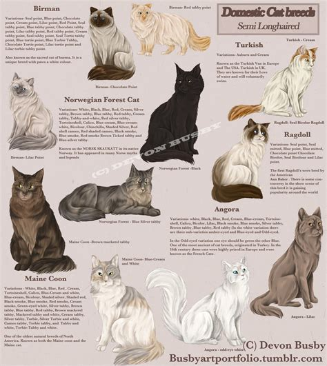 Types Of Cat Hair by Cat Breed Guide Semi Haired By Busbyart On Deviantart