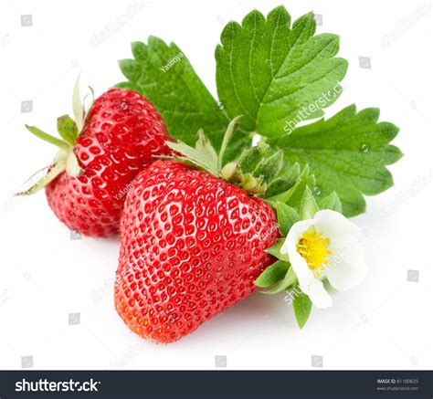 flower foods stock flower foods stock 100 flower foods stock cute food