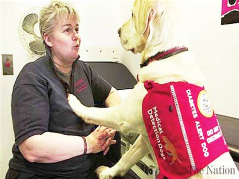 dogs detect cancer dogs detect breast cancer from bandage