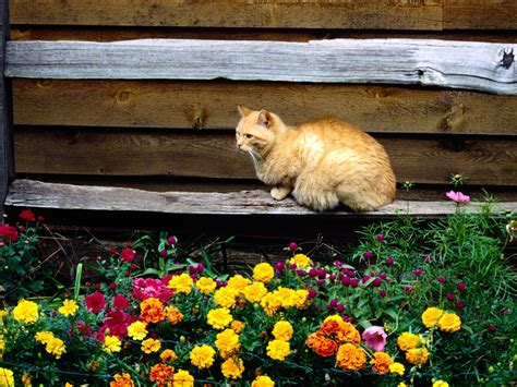 Garten Pflanzen Jahreszeit by Hintergrundbilder Katze Blumen Garten Sitzung Bank