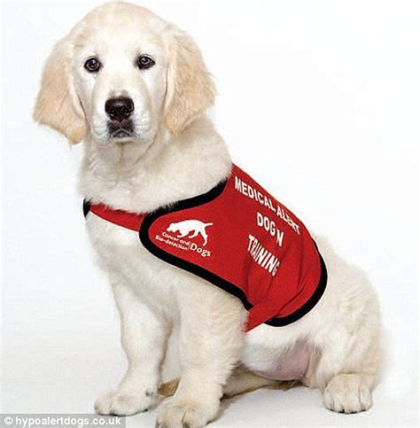 can dogs sweat health notes sniffer dogs that spot diabetes danger signs ethiogrio