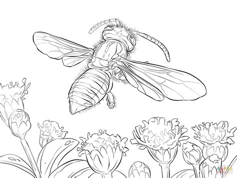 yellow jacket wasp coloring page free printable coloring
