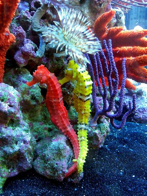 colorful seahorse wow colorful coral and seahorses sea by the sea